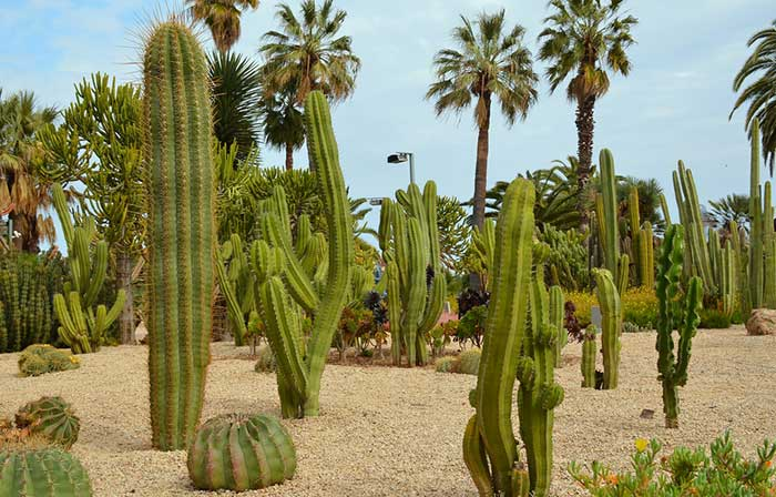 Кактусовый сад