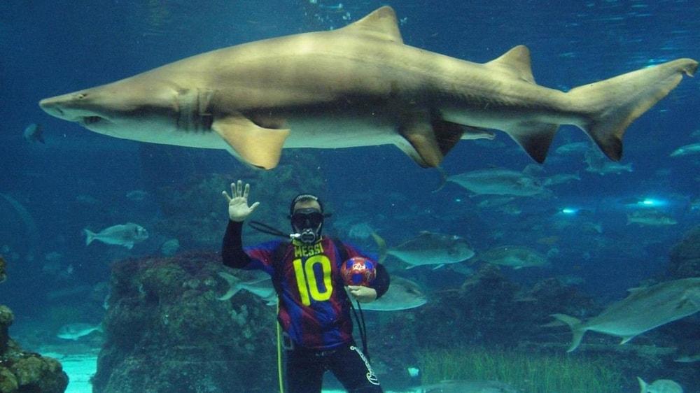 Дайвинг с акулами