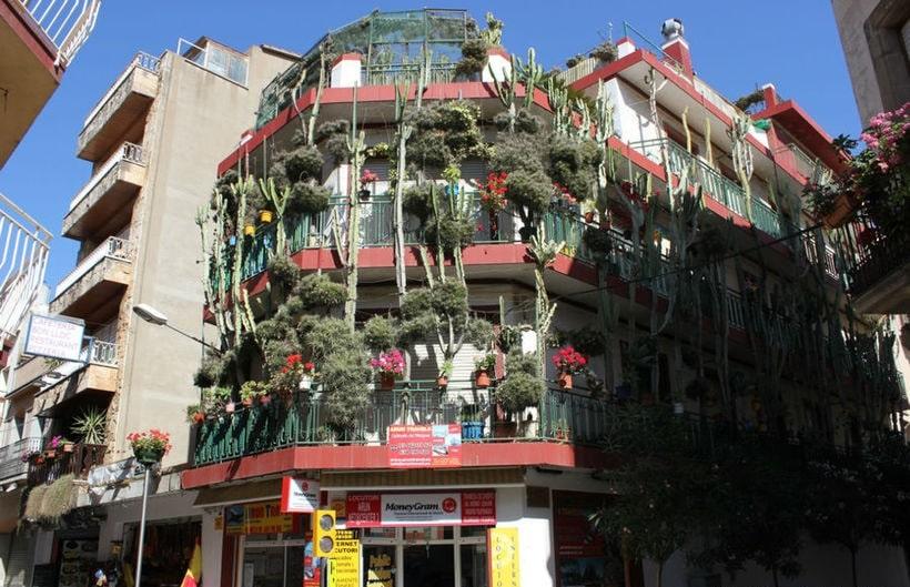 Кактусовый дом